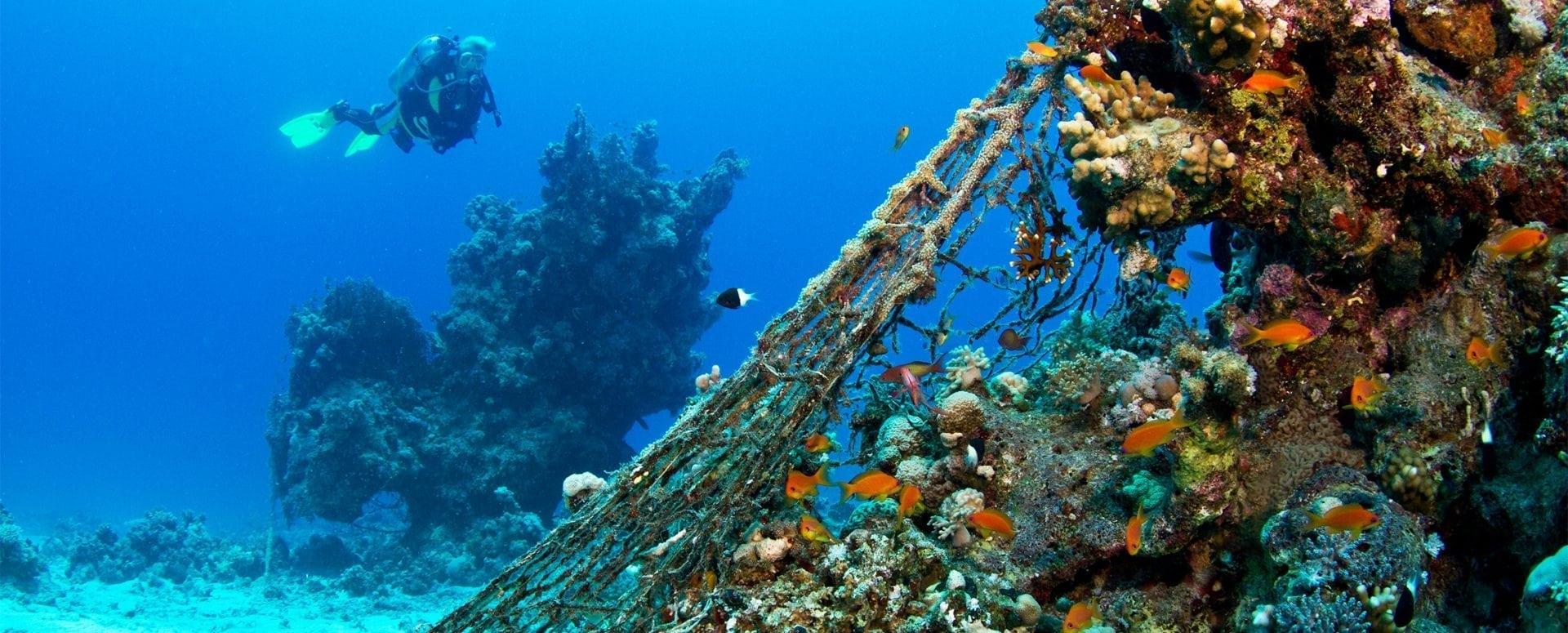 natura, impatto ambientale, aziende ecosostenibili